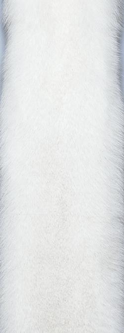 Blue Shadow Fox